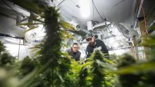 Small pot growers find roadblocks on path to microcultivation licences