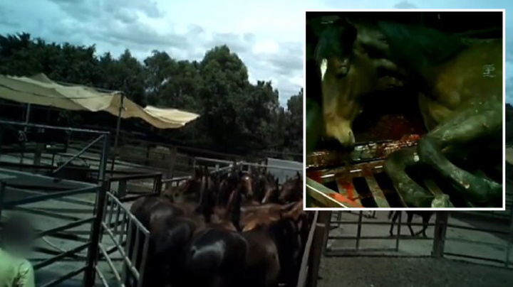 Hidden footage shows 'industrial' scale slaughter of Aussie racehorses