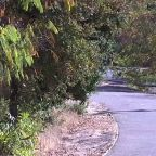 Santa Clara County prosecutor uses 13-year-old daughter as bait to catch alleged child molester on Los Alamitos Trail in San Jose
