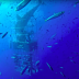 Intense video shows great white shark getting stuck inside a cage with 4 divers
