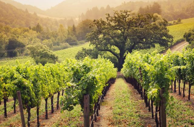 Irrigation robots could help grow wine grapes in California
