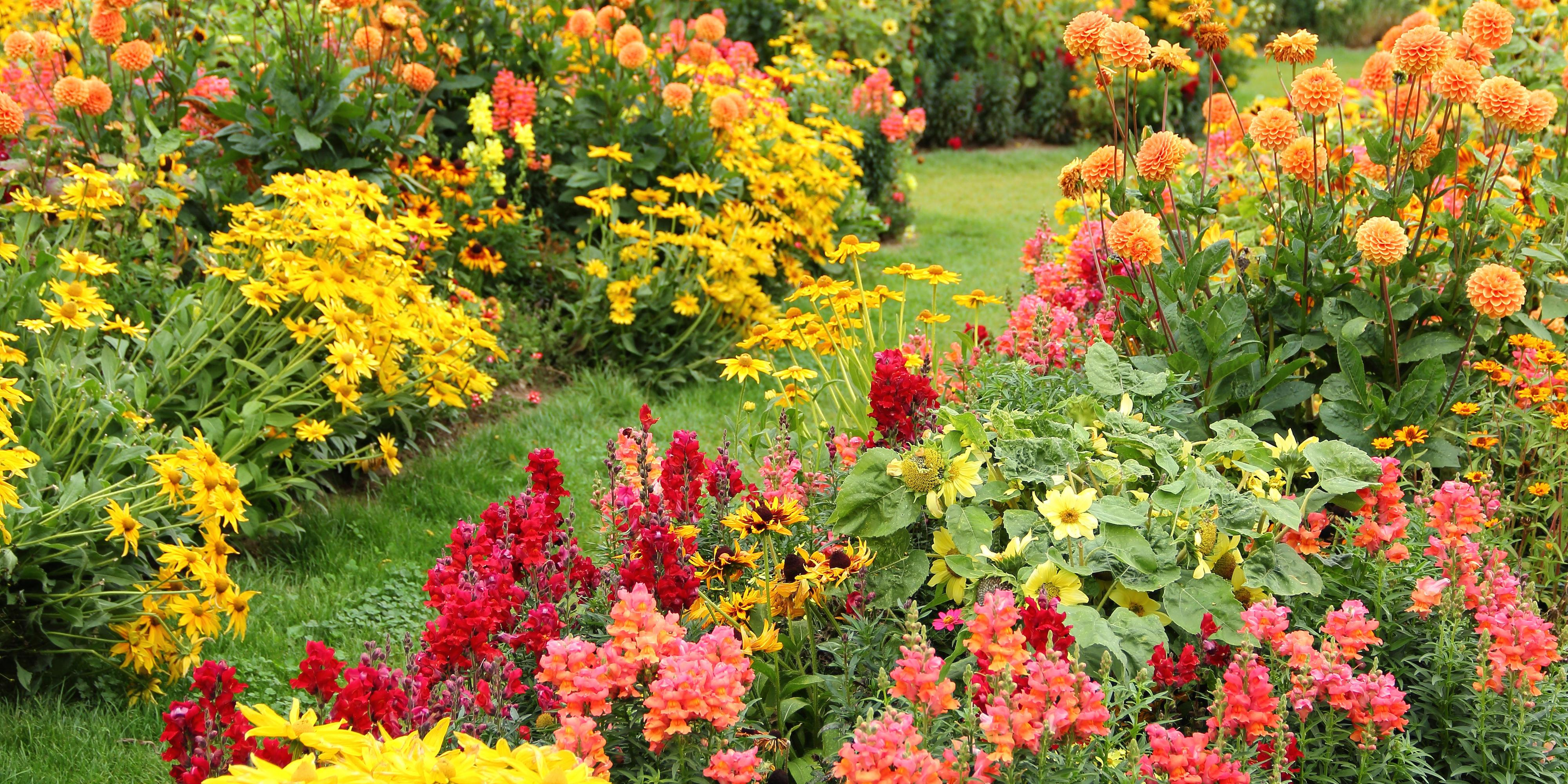 20 Fall Flowers And Plants For An Autumn Garden
