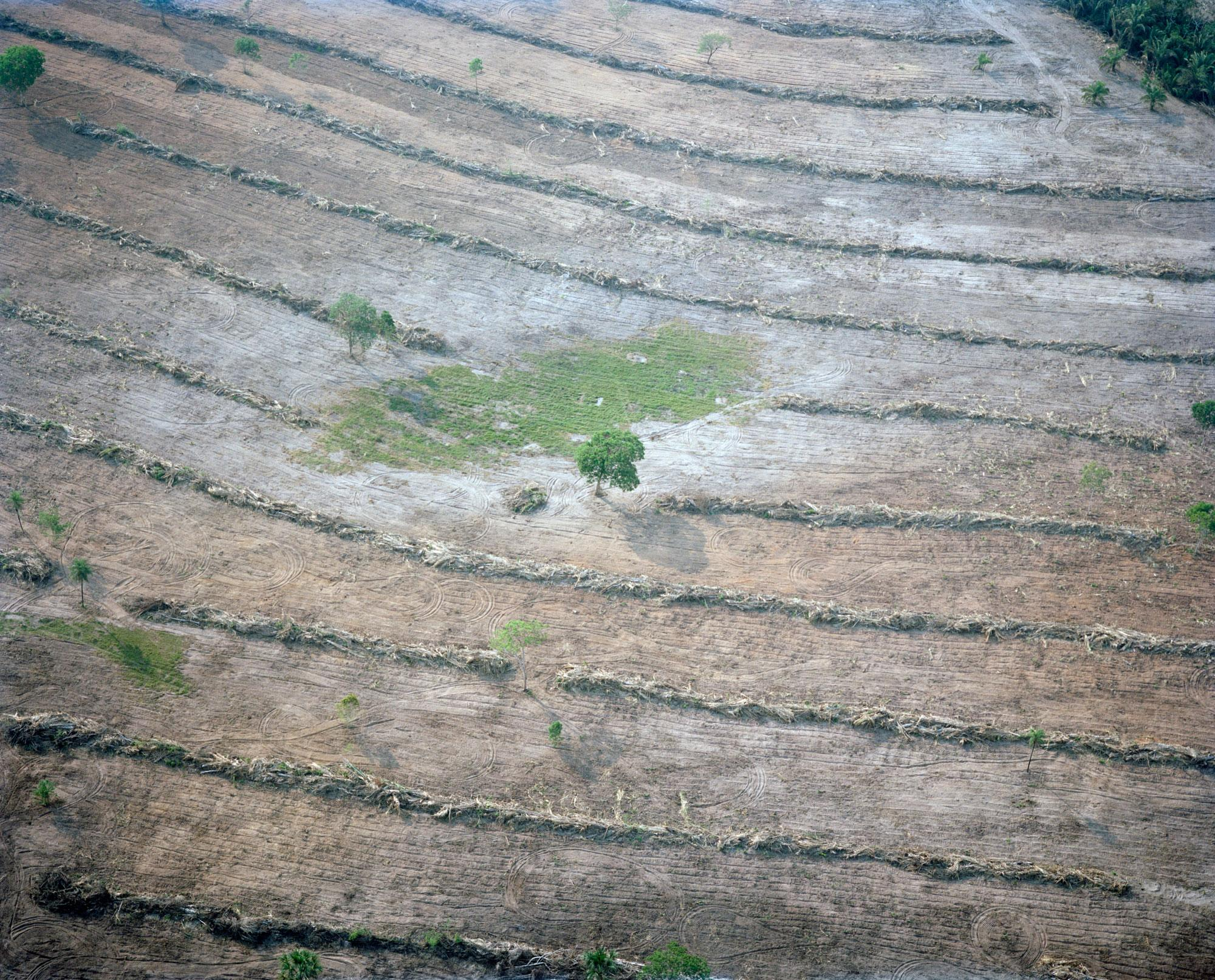 <p>Deforestation in Tangará da Serra, Mato Grosso, Brazil, 2015. Agriculture is expanding rapidly in Brazil. In the state of Mato Grosso, home to the Pantanal wetland and its headwaters, vast areas of forests have been cleared and vital vegetation has been removed around water sources to make way for cattle farming and staple crops for export such as soy and sugar cane. Lack of enforced forest protection and unsustainable farming practices lead to extensive soil erosion. Without the defense the trees provide, silt and agricultural pesticides pollute the rivers, reducing the water quality and, in extreme cases, stopping the flow of the natural springs altogether. (Photograph by Mustafah Abdulaziz/WWF-UK) </p>