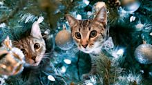 Cats Are Already Wreaking Havoc On The Nation's Christmas Trees