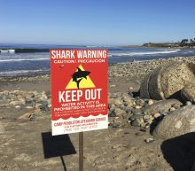 Swimmer injured in shark attack at Southern California beach