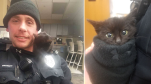 Kitten finds 'furr-ever home' after being found in snow-covered ditch
