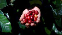 Exportadora de café Comexim vê safra recorde no Brasil este ano