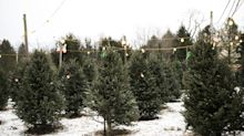 Blame the Financial Crisis for More Expensive Christmas Trees