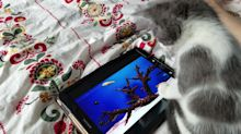 Kitten tries to scoop out fish from tablet