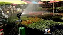 Gardening Experts Offer Tips To Protect Plants From Frost