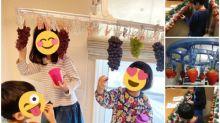 日本家庭在家摘葡萄 衣架當樹幹Twitter熱傳