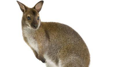 Quiz: Welches Tier ist das?