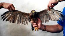Salvador vet's painstaking surgery helps mutilated bird fly again
