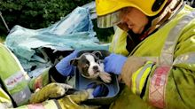 Memphis the puppy rescued by firefighters from footwell of van after rush hour pile-up