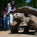 Tortoise With Serious Independent Streak Escapes Zoo. She Didn't Get Far.