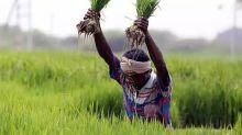 On CMs' table today: Plan to revamp permit-raj food laws