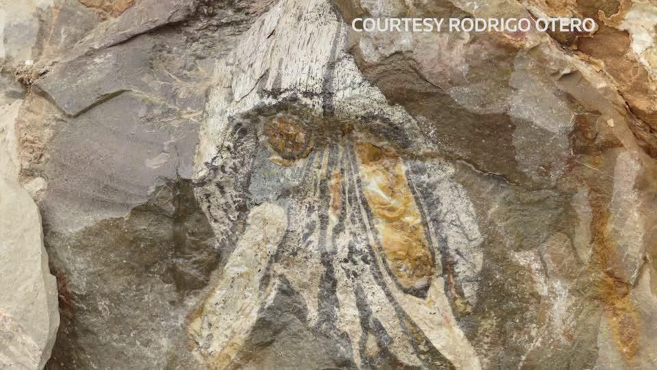 Daunting marine predator's fossil uncovered in Chile [Video]