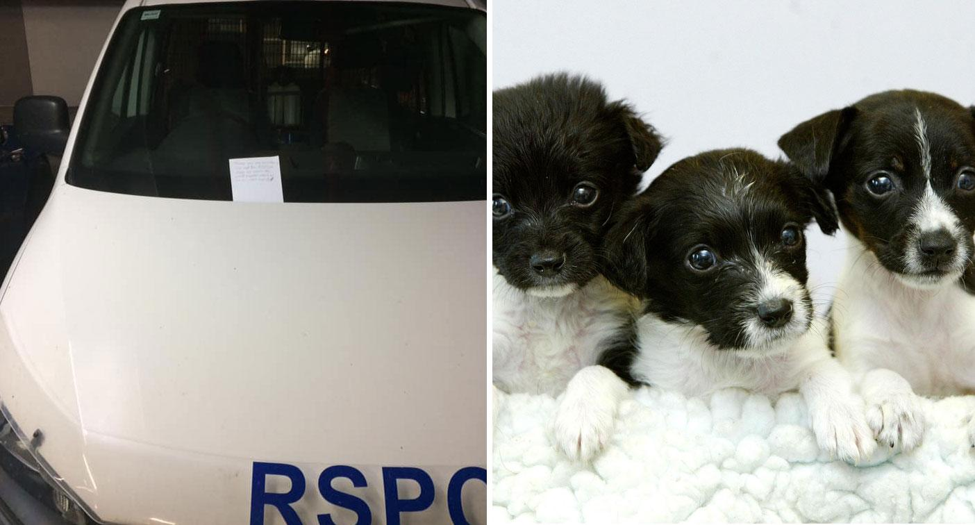 RSPCA worker's 'moment of panic' ends with heartwarming find