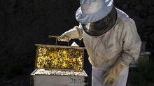 Coldiretti: in Lombardia -30% miele per colpa delle gelate tardive