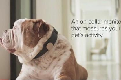 Whistle: the internet of everything goes to the dogs