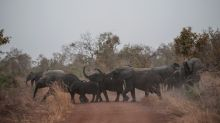Botswana accuses US of 'encouraging' elephant poaching