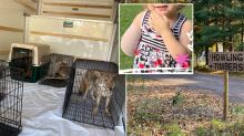 Toddler's arm ripped off by 'wolf dog' at grandmother's animal sanctuary