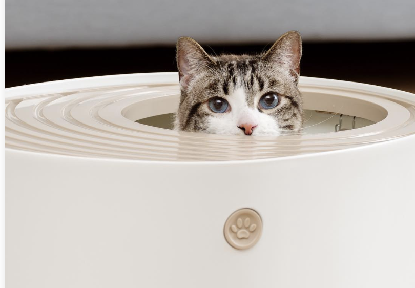 Made in the USA, Grand PooBox designers are thinking outside of the litter box