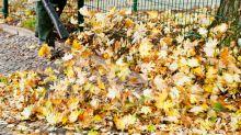 Danke, Laubbläser und Straßenreiniger: Das passiert mit dem Herbstlaub