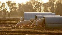 Cranswick buys more UK pig farms as it prepares for Brexit
