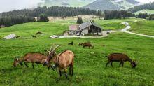 Dans les Alpes, les canons à neige de la discorde