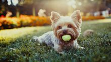 These Tiny Dog Breeds Would Fit in Any Home