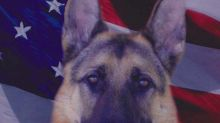 K-9 Obituary Goes Viral: Pass the Tissues