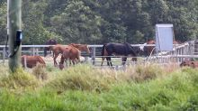 Horse welfare on ministers' meeting agenda