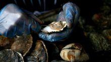 Mangia ostriche crude e muore �