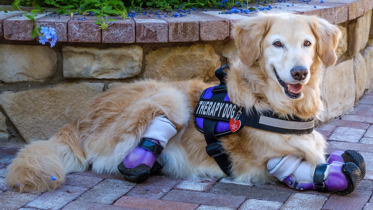 How To Train Alzheimer S Service Dog
