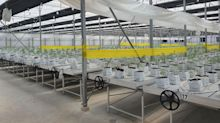 Water Ways Received Fifth Order for its Medical Cannabis IOT Precise Irrigation and Fertilization System