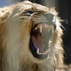 This stock market boosting scheme has come roaring back
