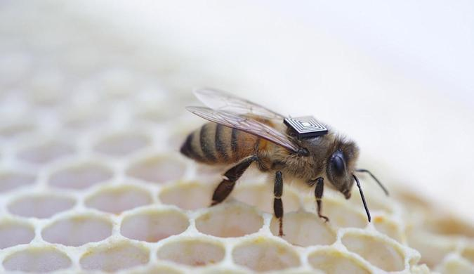 Intel chips to help pinpoint cause of bee colonies' deaths
