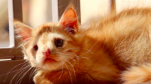 Everyone thought this adorable kitten was too ugly to be adopted - but they were wrong