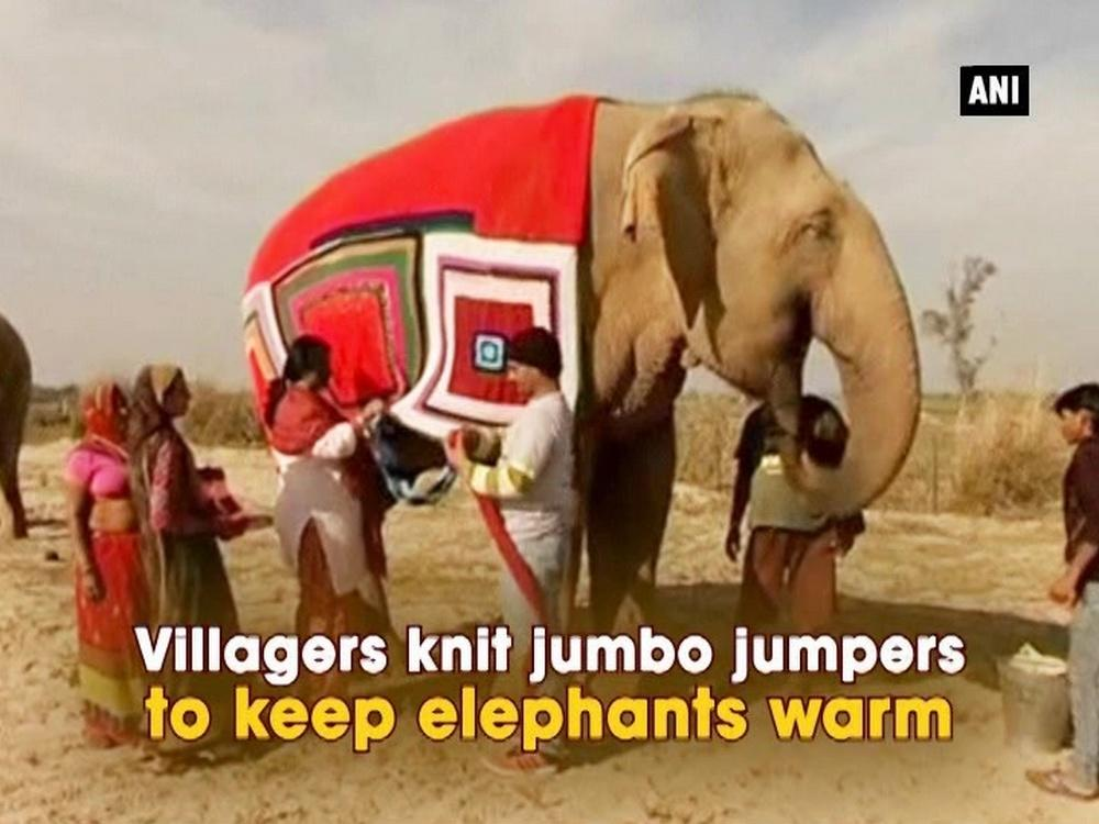 Knitting Jumpers For Elephants Fake : Villagers knit jumbo jumpers to keep elephants warm video