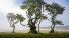 全世界最美的森林