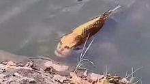 """Cina, avvistato in un lago un pesce con la """"faccia umana"""""""