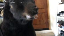 'Shoo, bear:' Colorado woman's close encounter with a bear in her garage goes viral
