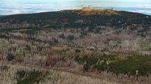 Statistik: Schadholzeinschlag in Wäldern nimmt deutlich zu