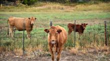 10,000 Farmers And Ranchers Endorse Green New Deal In Letter To Congress