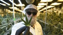 AdvisorShares CEO says 2020 'could be a good year' for cannabis