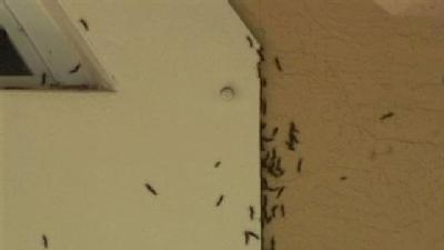 Love Bugs Invade Port St. Lucie Home