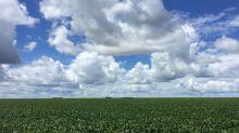 Norte e Nordeste do Brasil terão maior salto no plantio de soja em 4 anos