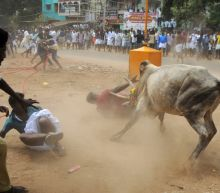 Two killed in Indian bull-wrestling festival: report