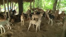 Yangon clamps down on stray dogs